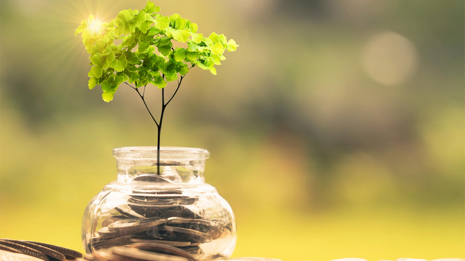 question answered  sustainable finance  a treasury