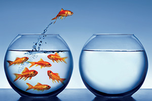 Goldfish jumping out of one fish bowl to the other