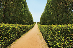 Hedge tunnel with path
