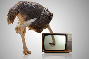 Ostrich looking through a television