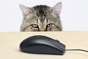 Cat hunting computer mouse