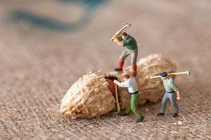 Toy lumberjacks hacking at a peanut