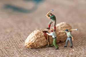 Toy lumberjacks hacking at a peanut