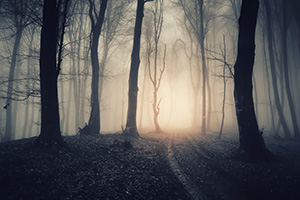 Dark, misty forest