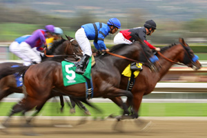 Race horses competing