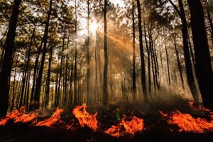 Wildfire spreading in woods