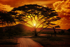 Beautiful sunset in Africa