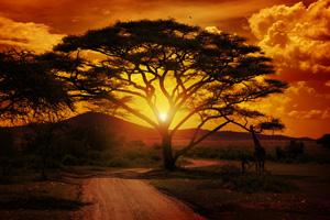 Beautiful Sunset In Africa