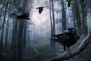 Black crows in misty forest at night