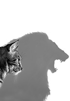 House cat casting shadow of a lion
