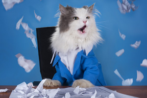 Cat in a business suit scratching up paperwork