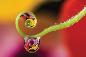 Green flower stem with droplets of dew reflecting a clear image of flowers in the blurred background