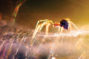 Abstract photo of spider