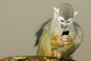 Monkey playing with mobile phone
