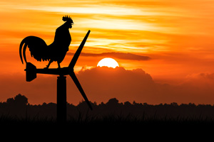 Silhouette of roosters crow stand on a wind turbine, in the morning sunrise background