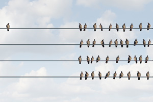 Birds sitting on electric lines together apart from one