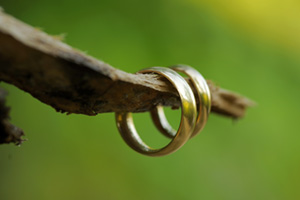 Two gold rings hanging on a tree branch