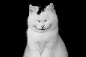 White and black cat smiling