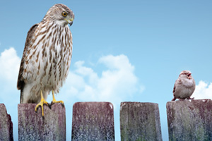Big and small bird sitting on a fence