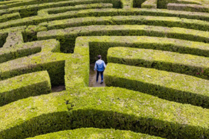 Man lost in hedge maze
