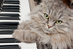 Cat playing the piano