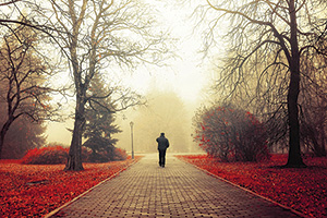Person walking through park in Autumn with the orange leafs and fog