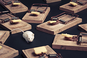 Mouse in the middle of mouse traps
