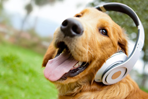 Cute dog with headphones on listening to music