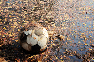 Old football covered in mud and leaves in a puddle