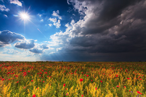 Beautiful field with wild flowers with ominous sky rolling in