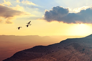 Migrating cranes flying over mountains in a golden, cloudy sky