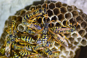 Close up of wasps next with wasps sitting on it