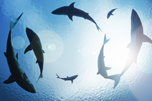 School of sharks circling in the sea