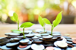 Plants growing between coins portraying concept of profit growth