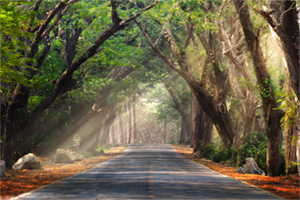 Background of route and journey amidst big trees and beautiful nature