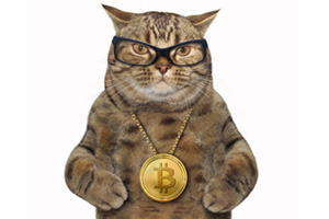 Cat wearing glasses and a Bitcoin chain around it's neck
