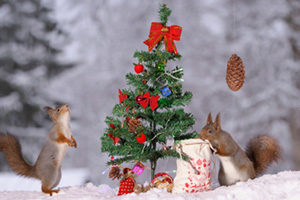 Two red squirrels messing around in the snow around a small christmas tree