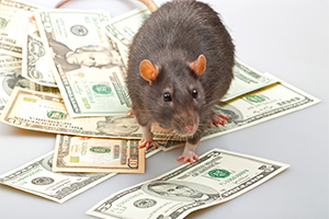 Rat standing on a bunch of american dollar notes