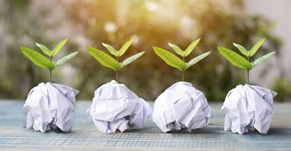 A row of small trees planted in paper