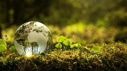 Glass globe sitting on green moss floor