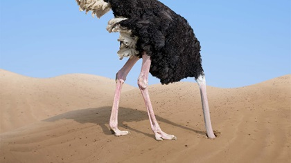 Ostrich burying it's head in the sand, ignoring what's going on around it