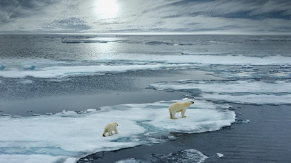 Polar bears standing in the middle of icebergs