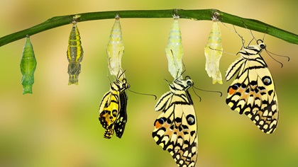 Evolution of a butterfly