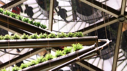 Building and plants on escalator