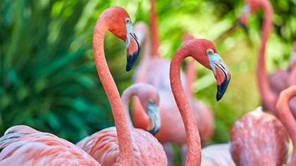 Bunch of pink flamingos