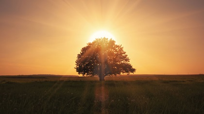 Photo of tree with sunrise