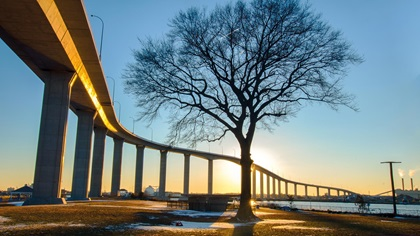 Tree infront of a bridge during sunset