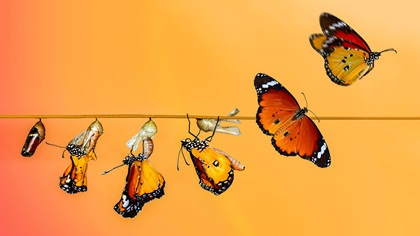 Evolution process of a butterfly