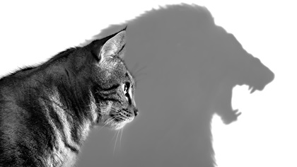 Cat casting shadow of lion