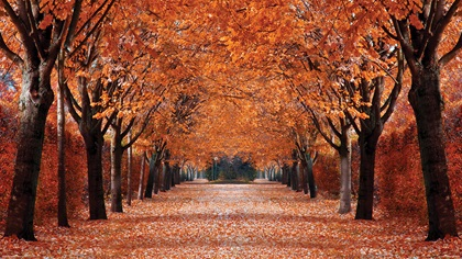 Rows of trees with orange leaves in Autumn